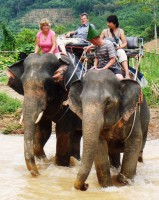 khanom-hill-surroundings-elephants