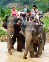 khanom-hill-surroundings-elephants