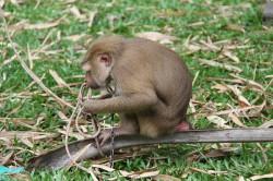 khanom-hill-surroundings-monkey-2
